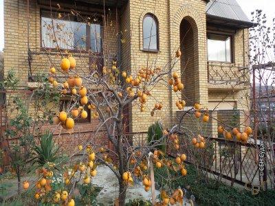 Продаётся домовладение в селе Морское